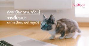 คิดจะเป็นทาสแมวต้องรู้ การเลี้ยงแมว และการฝึกแมวอย่างถูกวิธี
