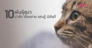 พันธุ์แมว
